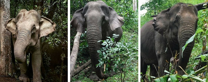 4 Reasons Why The Environment Needs Elephants | GVI