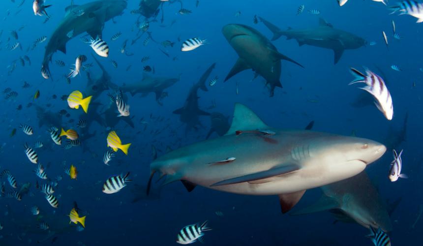 Endangered Animals Sharks