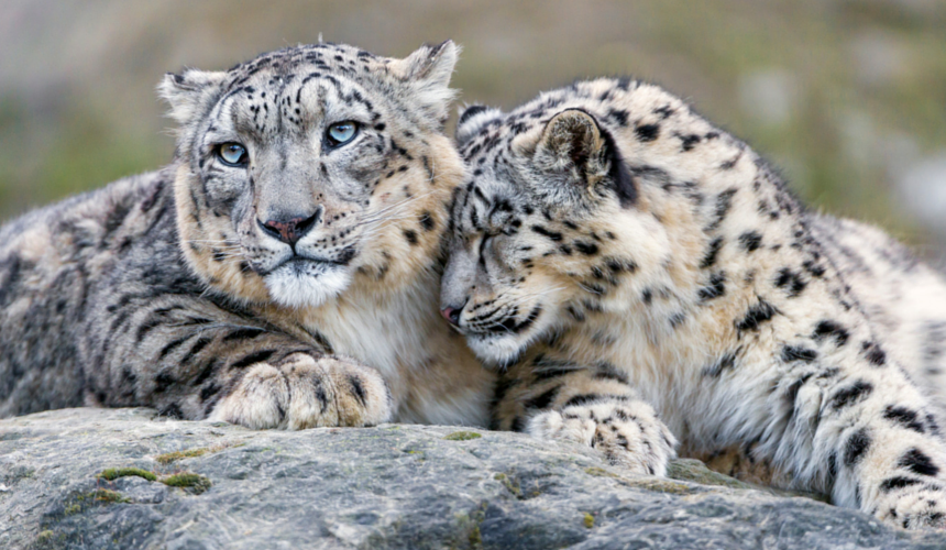 Father's Day In The Animal Kingdom: A Photographic Celebration Of Parenthood
