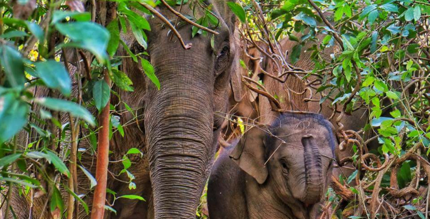 This Is Why You Should Help Protect Elephants