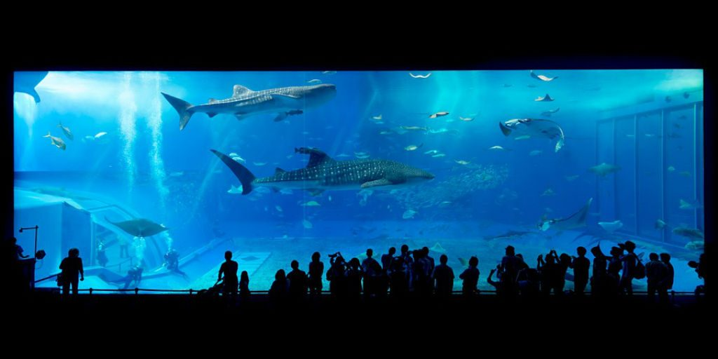 A trip to the aquarium is beautiful and splendorous, but it is our duty to check what condition the animals we are seeing are living under.