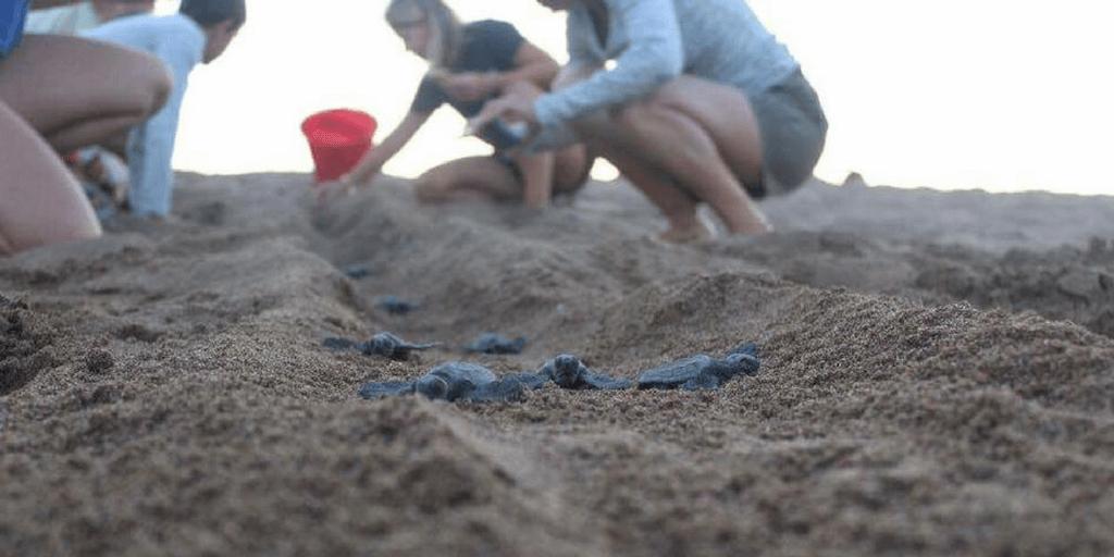 teen sea turtle conservation volunteer