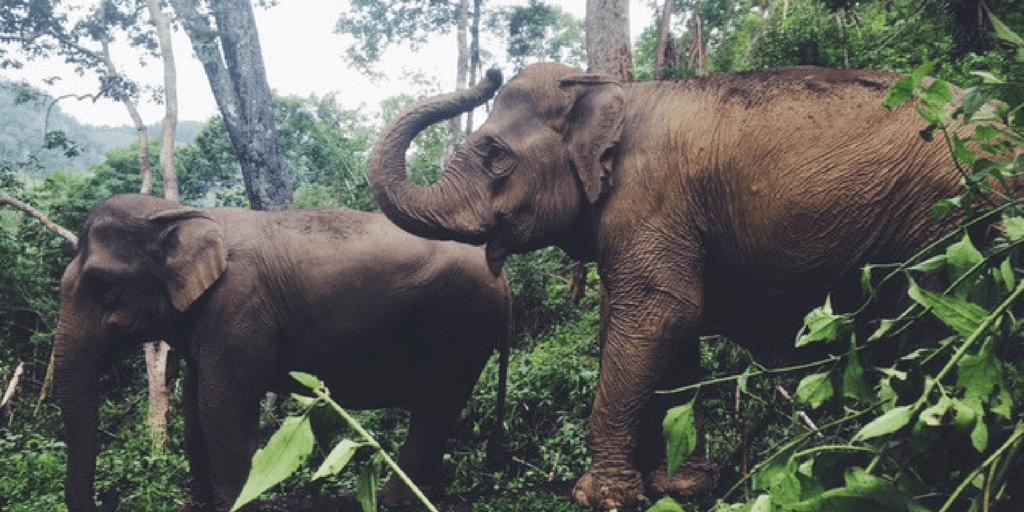 visit the cambodian elephant sanctuary