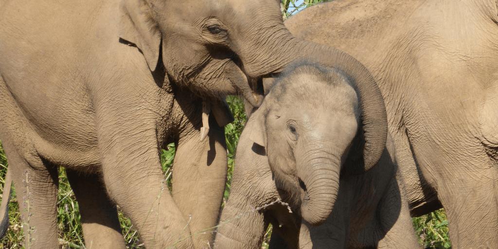 Elephant conservation on a gap year study abroad program.