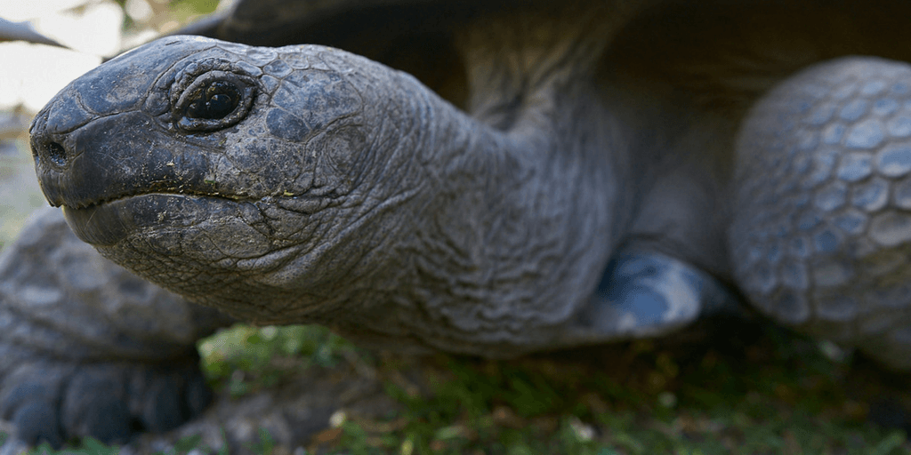 Giant Tortoise And Biodiversity Research Summer Program In Seychelles
