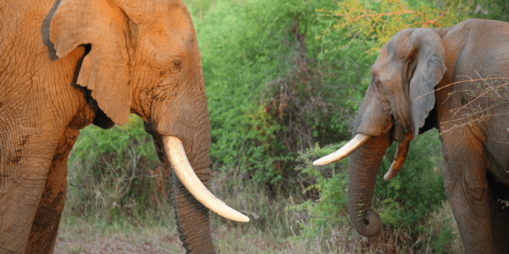 Elephant Research Summer Program In South Africa