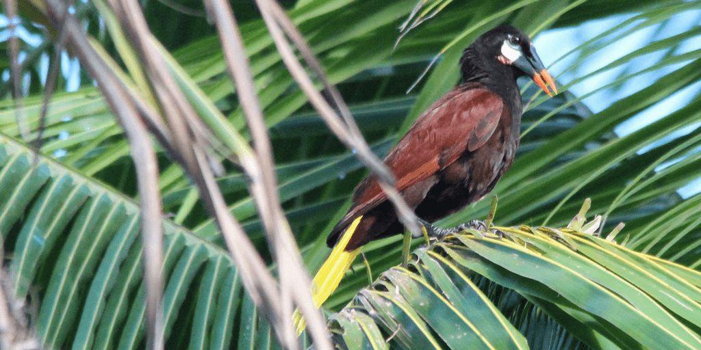 Summer Bird Research Program In Costa Rica
