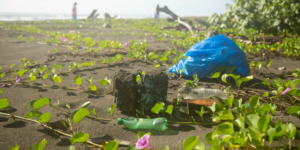 Single use plastics and their impact on the ocean