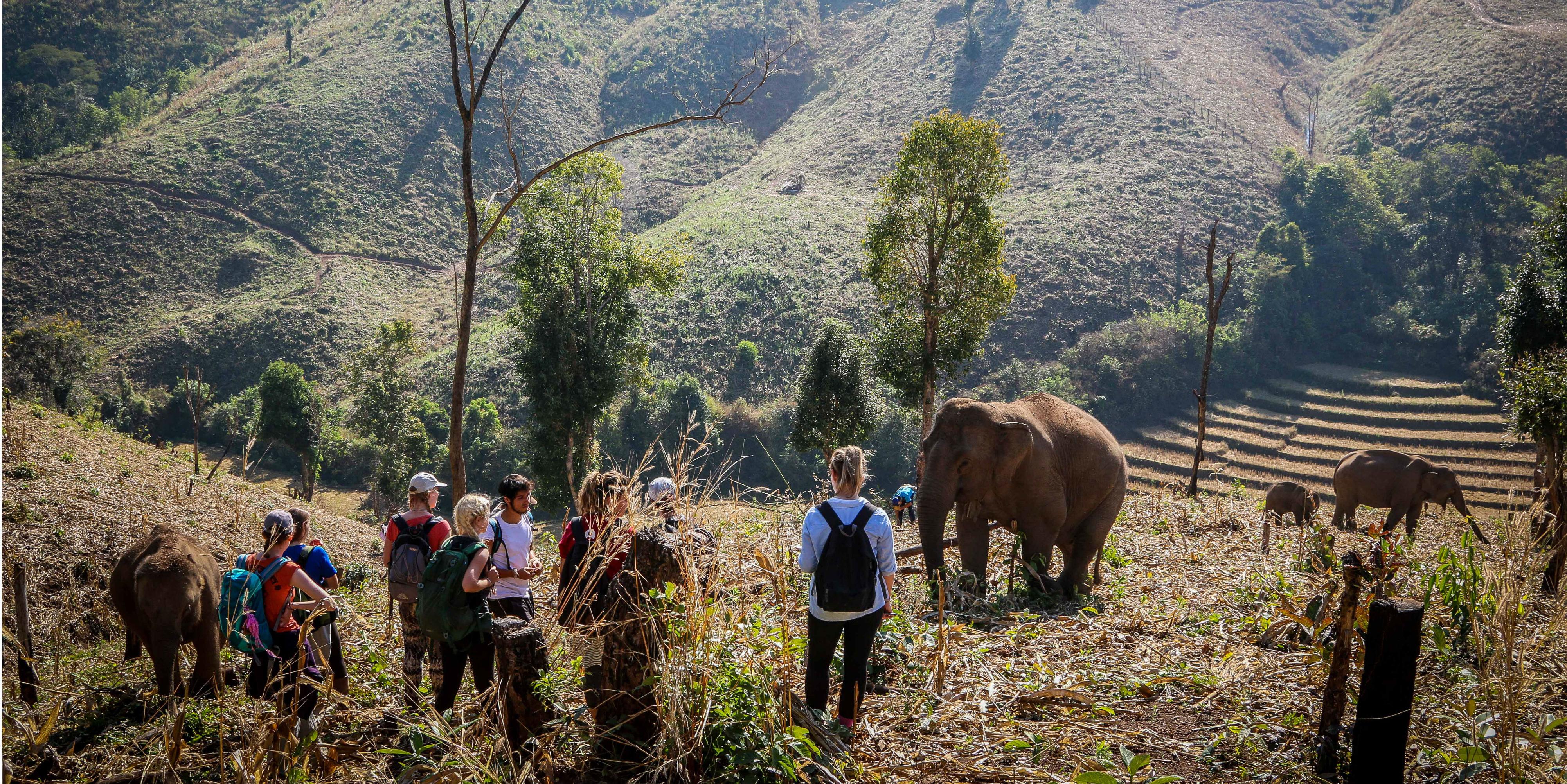 thailand's elephants