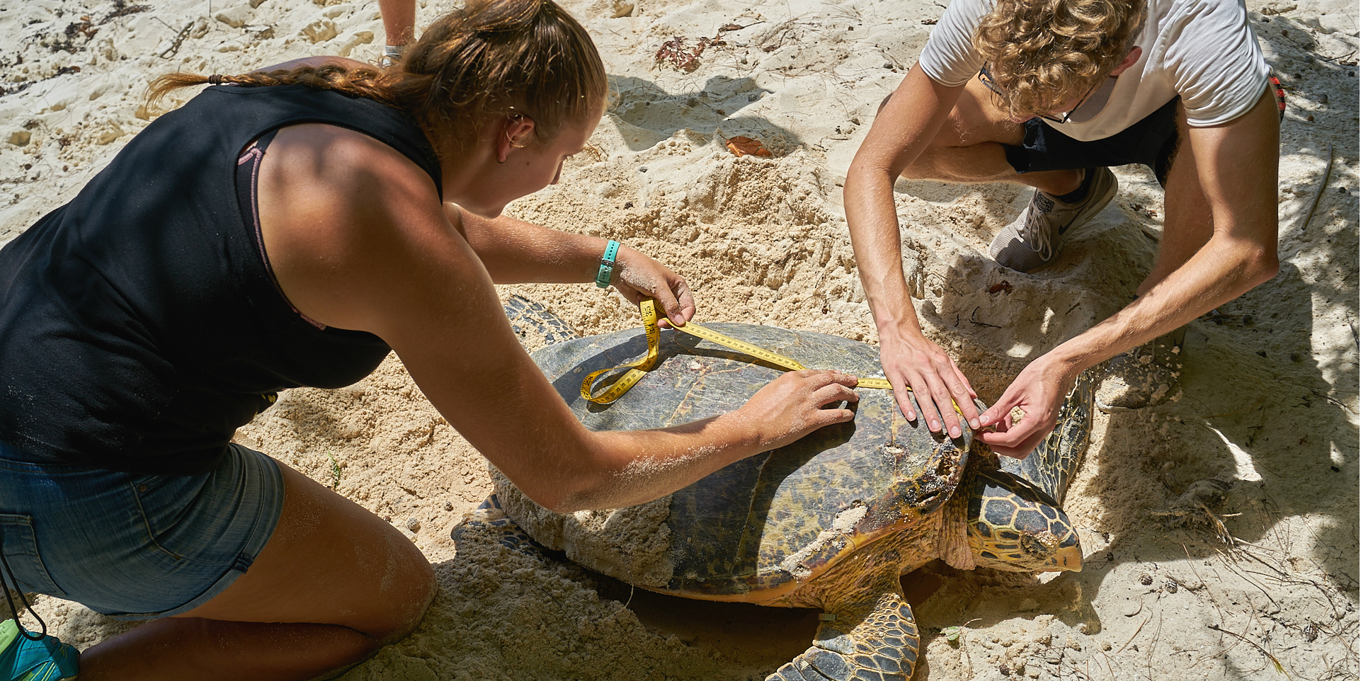 volunteer in seychelles