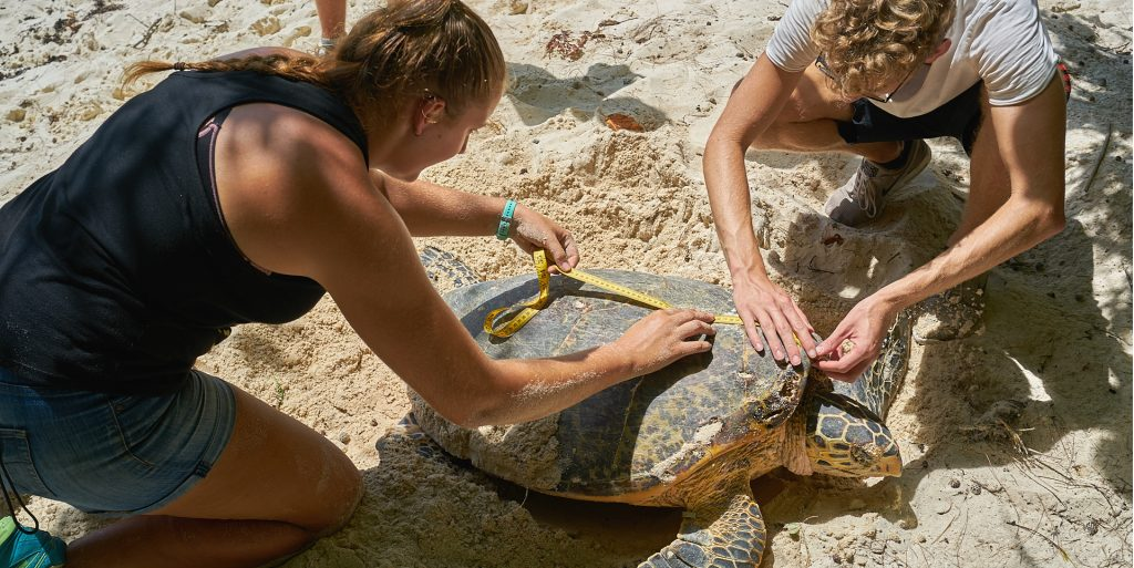 Teens volunteering abroad during high school on this Seychelles turtle conservation program
