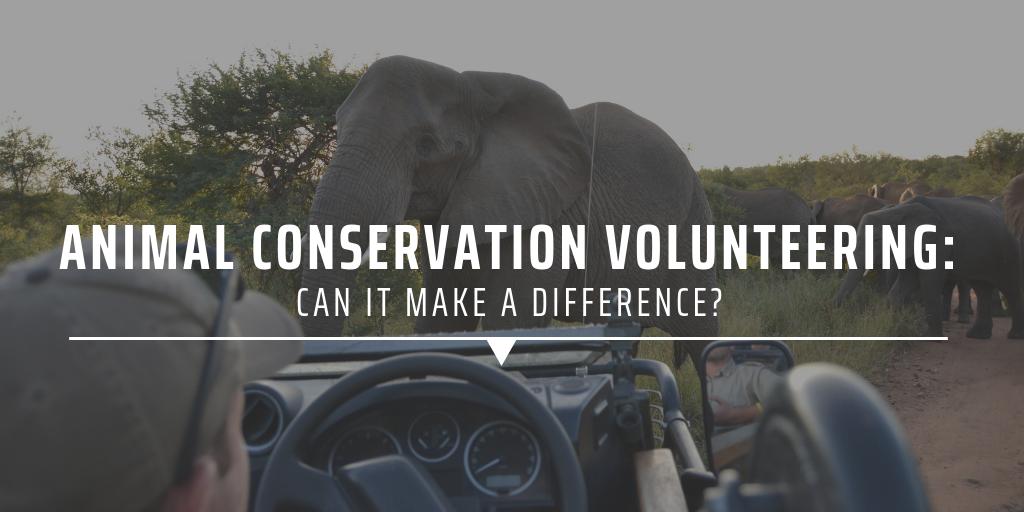 animal conservation volunteering