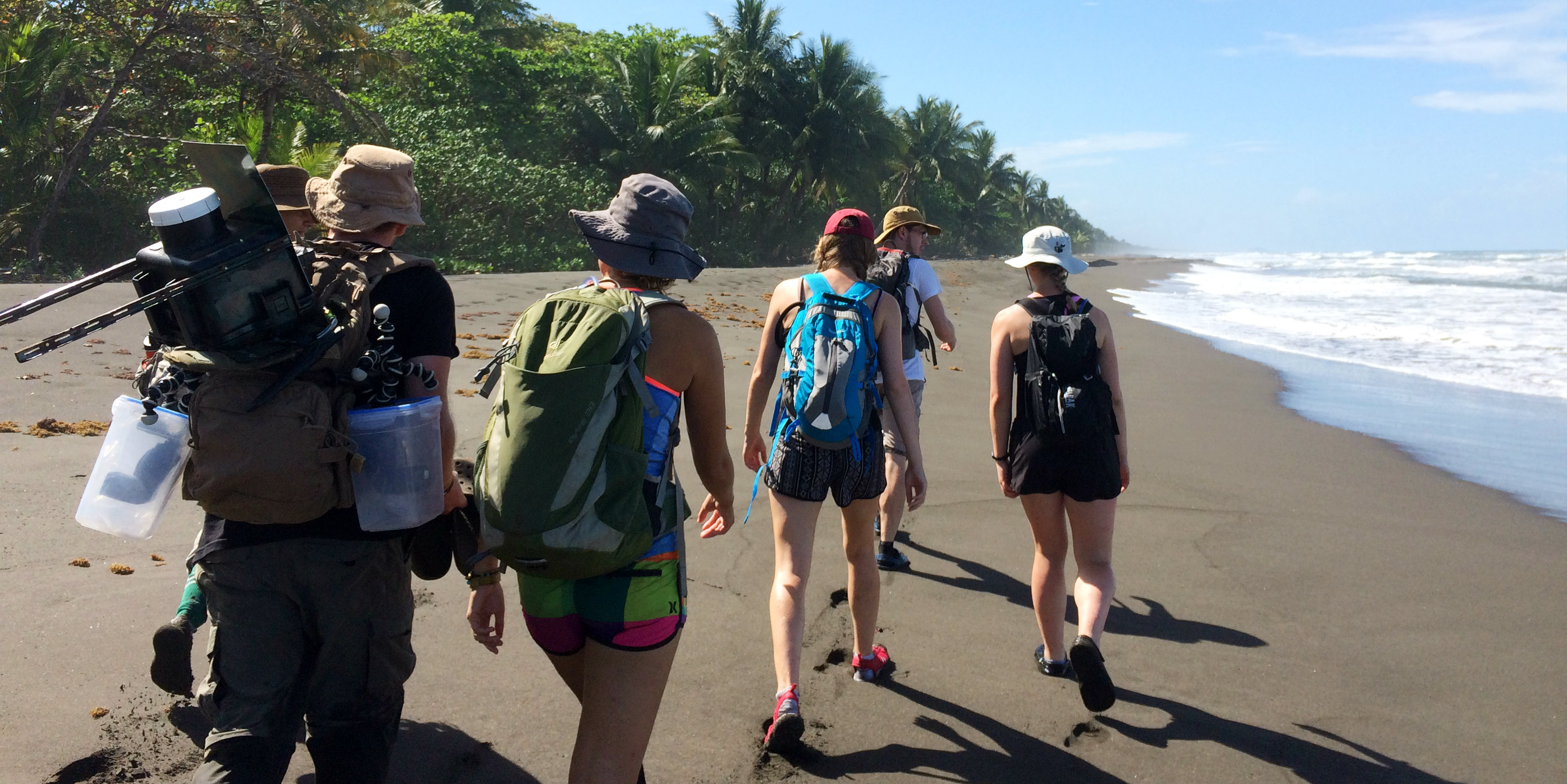 GVI participants patrol the beach in Tortuguero National Park, Jalova. Participants record evidence of jaguar-turtle interaction as part of a program designed to support jaguar and sea turtle conservation/