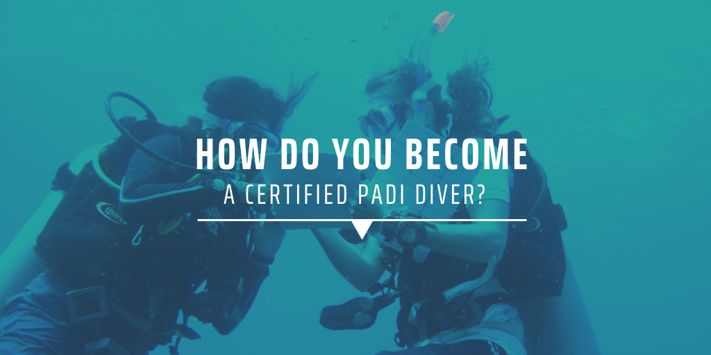 How do you become a certified PADI diver