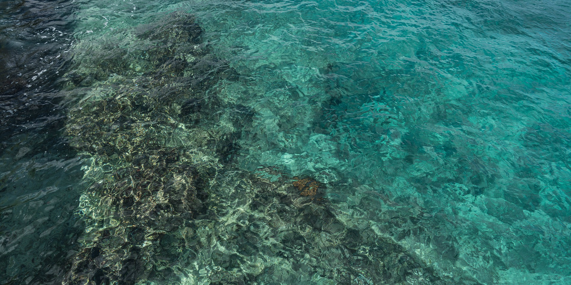 Volunteers in Mexico work to conserve coral reefs in the region.
