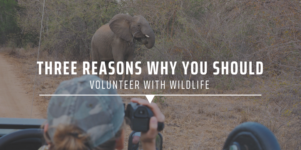 three reasons why you should volunteer with wildlife