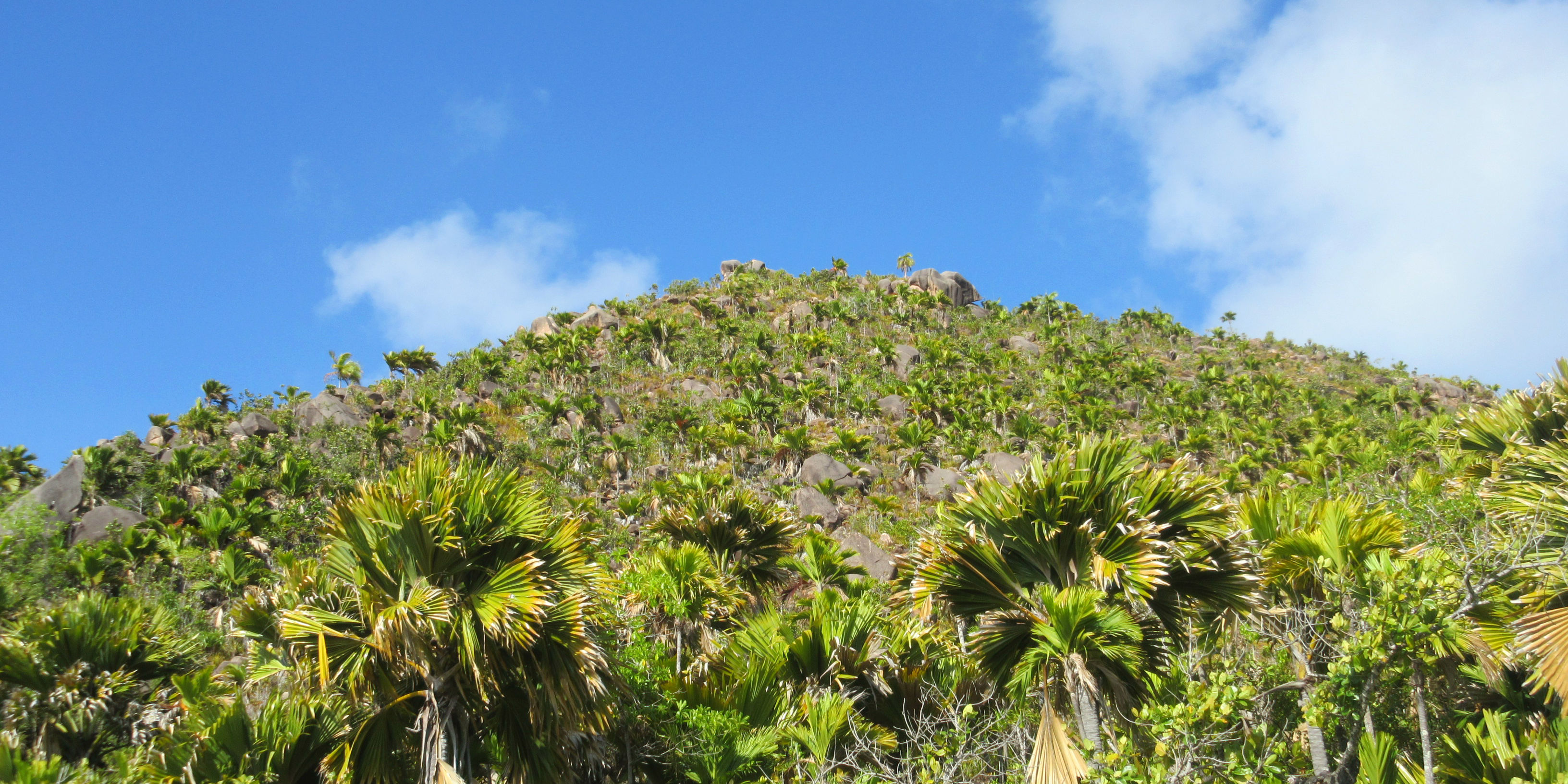 The route to the peak of this hill is peppered with mangroves and coco de mer trees.