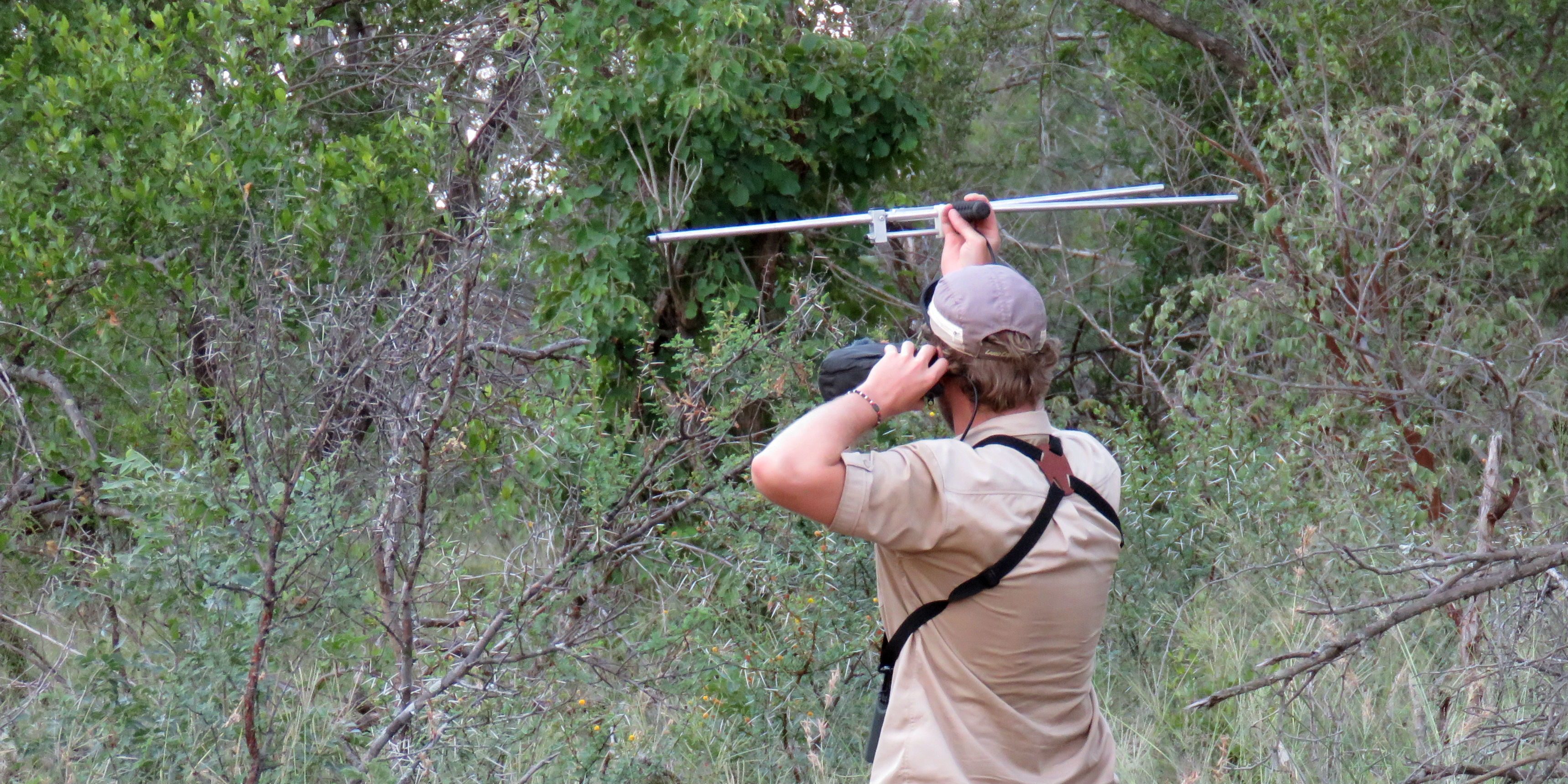 A GVI participant uses radio telemetry, as part of a wildlife conservation internship.