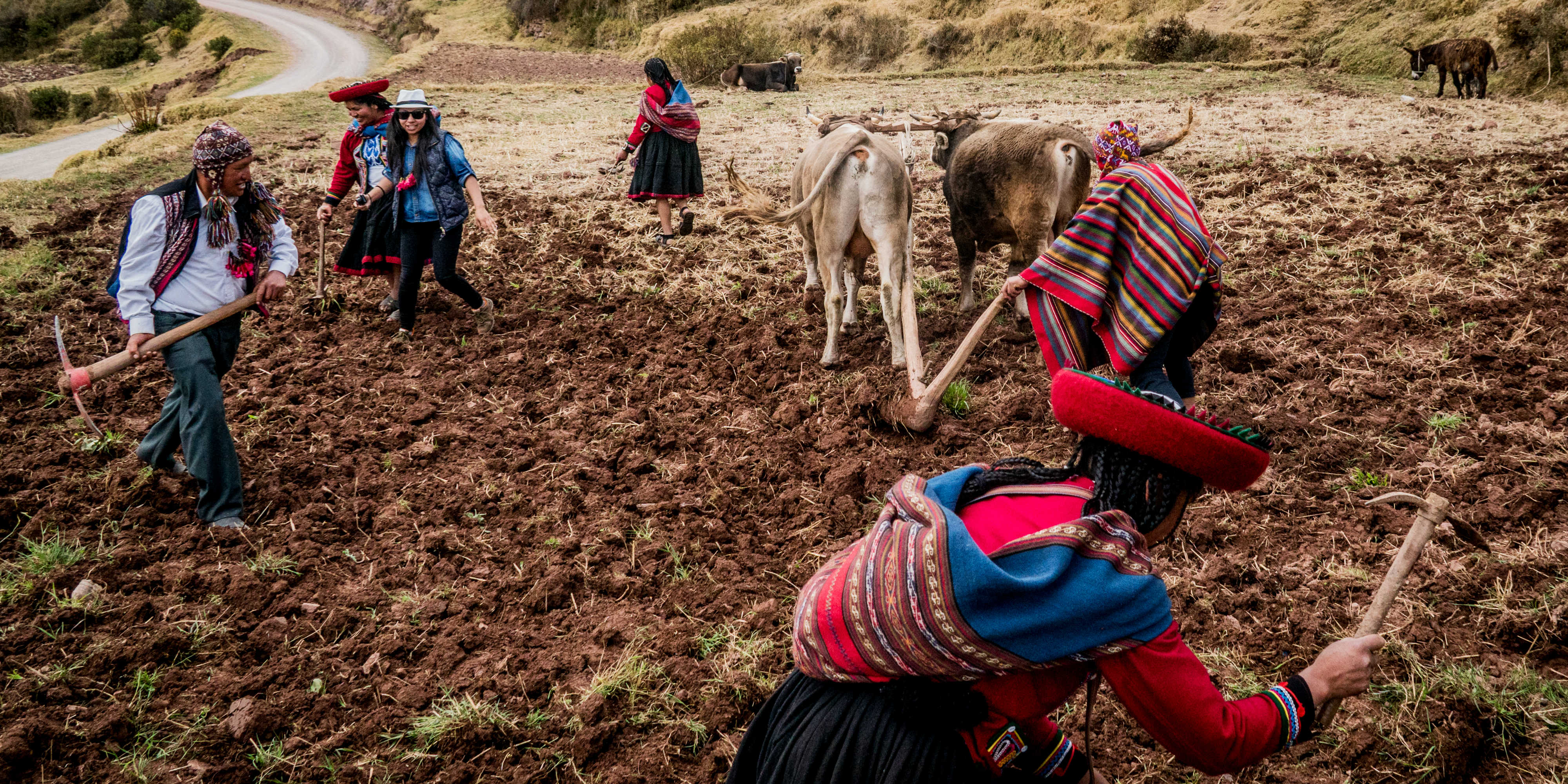 Quechua culture in Peru is mostly in rural areas, and agricultural communities, like this.