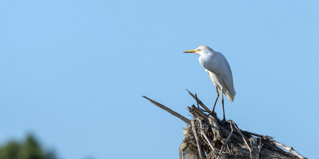 The Cattle Egret is just one of the hundreds of birds species in this biodiversity hotspot.