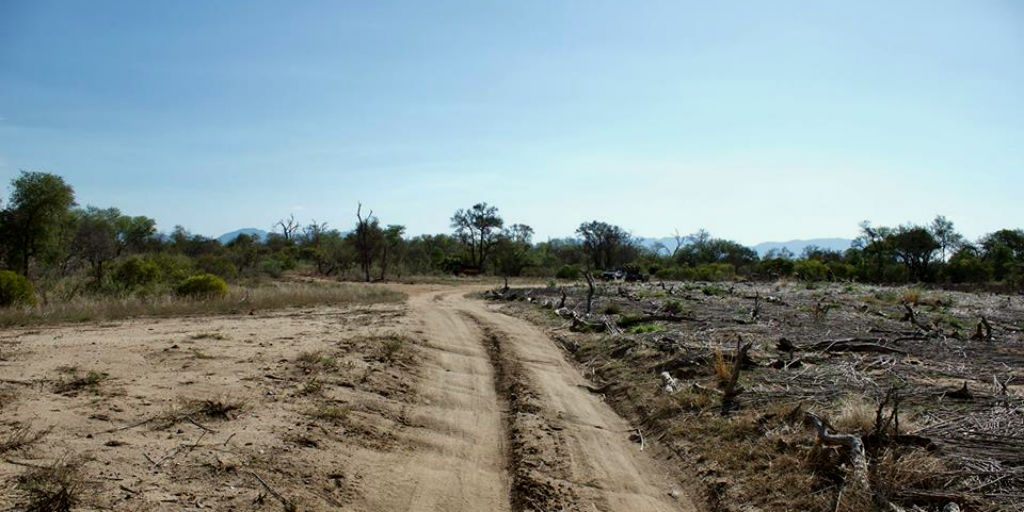 The seemingly quiet African landscape is a biodiversity hot spot of different species, prey and predator.