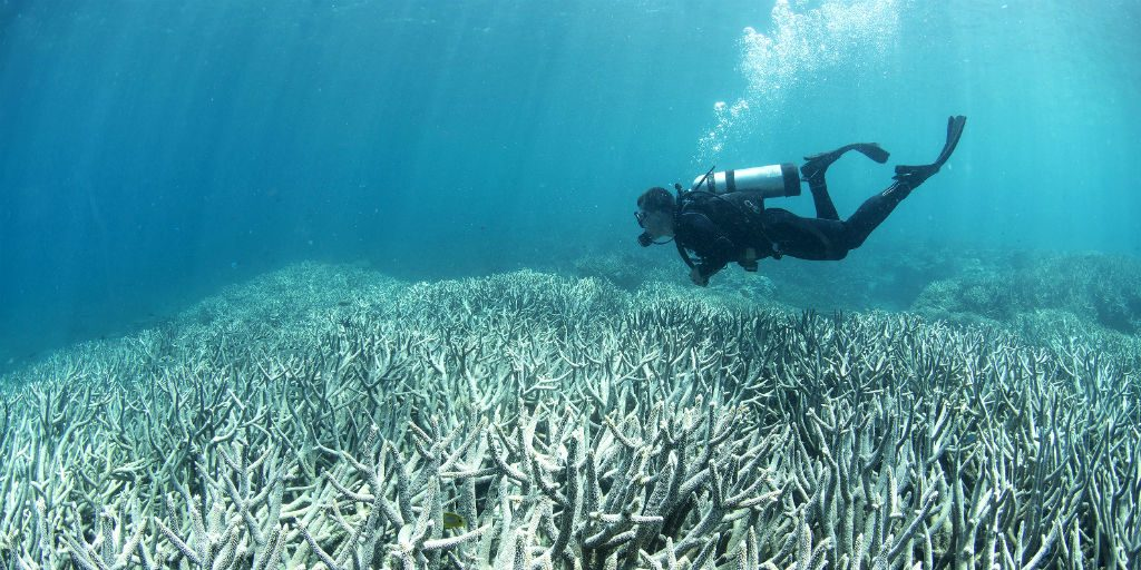 Coral bleaching is irreversible but can be prevented within the marine protected areas through marine conservation.