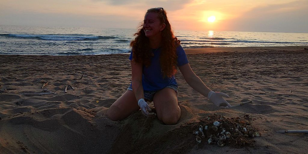 Sea turtle conservation interns excavate the turtle nest to collect hatchling success rates