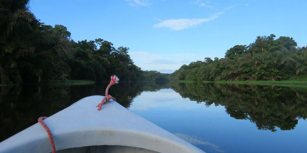 Drift through the Tortuguero national park in Costa Rica, birdwatching on our GVI volunteer programs