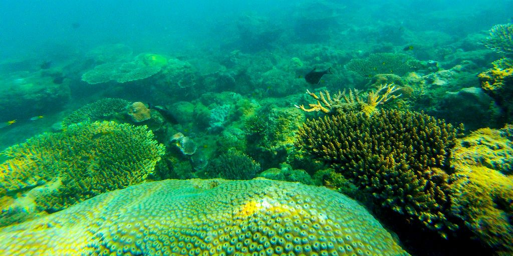 Our conservation efforts aim to protect the ocean which helps regulate and provide oxygen, while absorbing carbon dioxide.