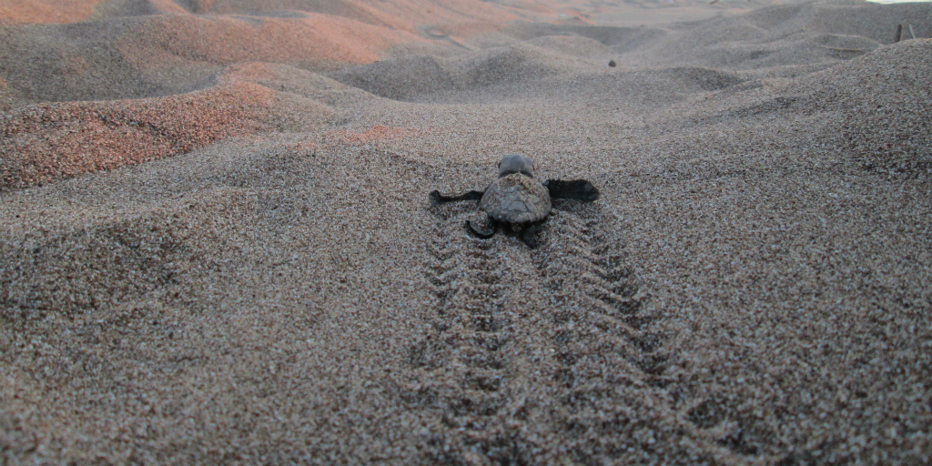 sea-turtle conservation is a widely spoken about issue in Greece