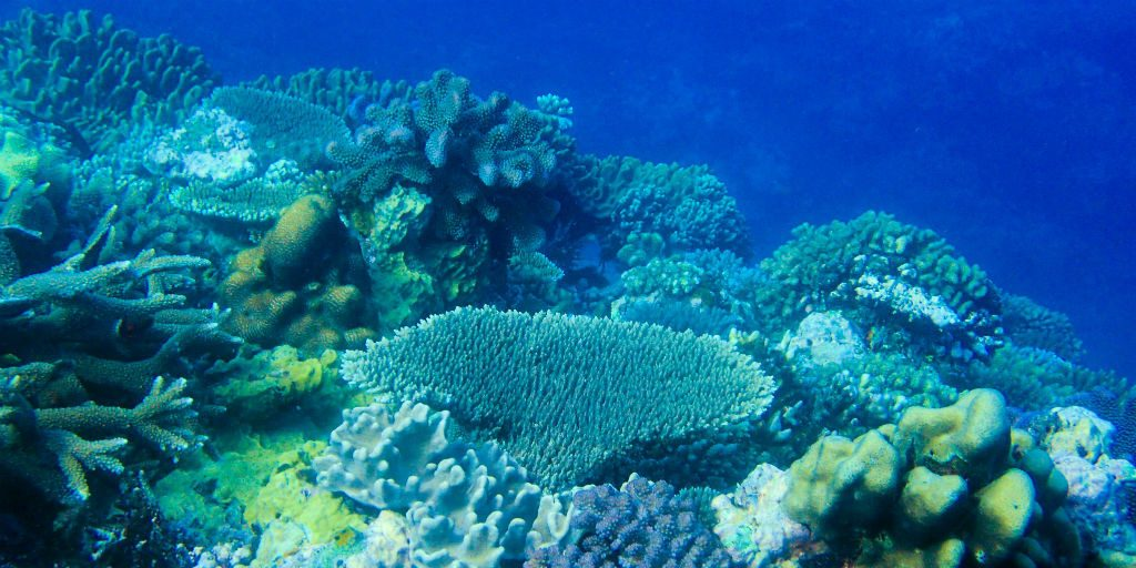 Coral reefs are the most diverse marine ecosystems