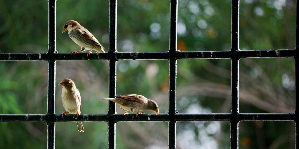 Glass windows have a negative environmental impact on birds
