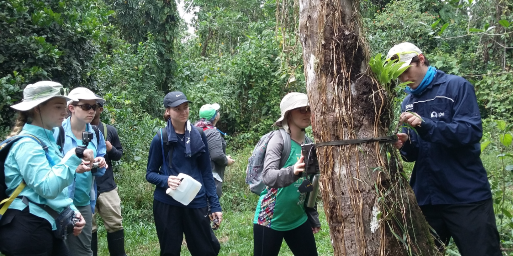 Volunteers watch a surveying device being secured to a tree in the forest