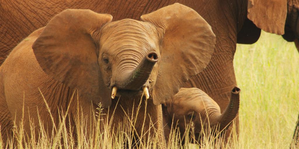 Volunteer to help elephants in South Africa