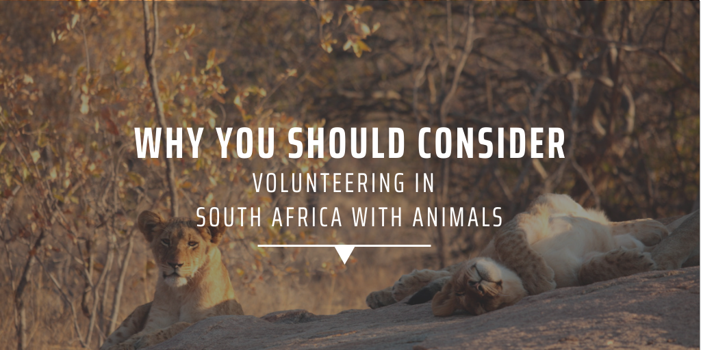 Why you should consider volunteering in South Africa with animals