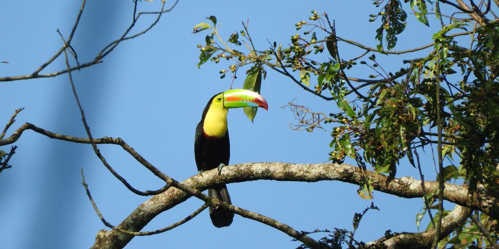 Jalova Bird Surveys allow volunteers to see species they have never encountered before.