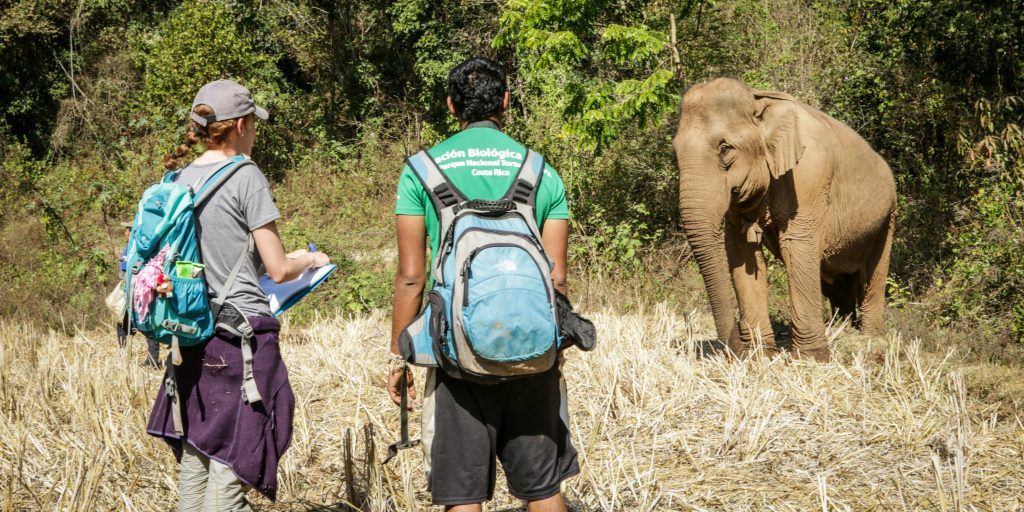 Two volunteers standing at a distance from a wild elephant in Chiang Mai.