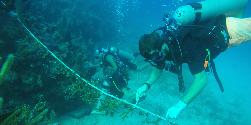 Volunteers doing an underwater survey of a coral reef in Peurto Morelos, Mexico.