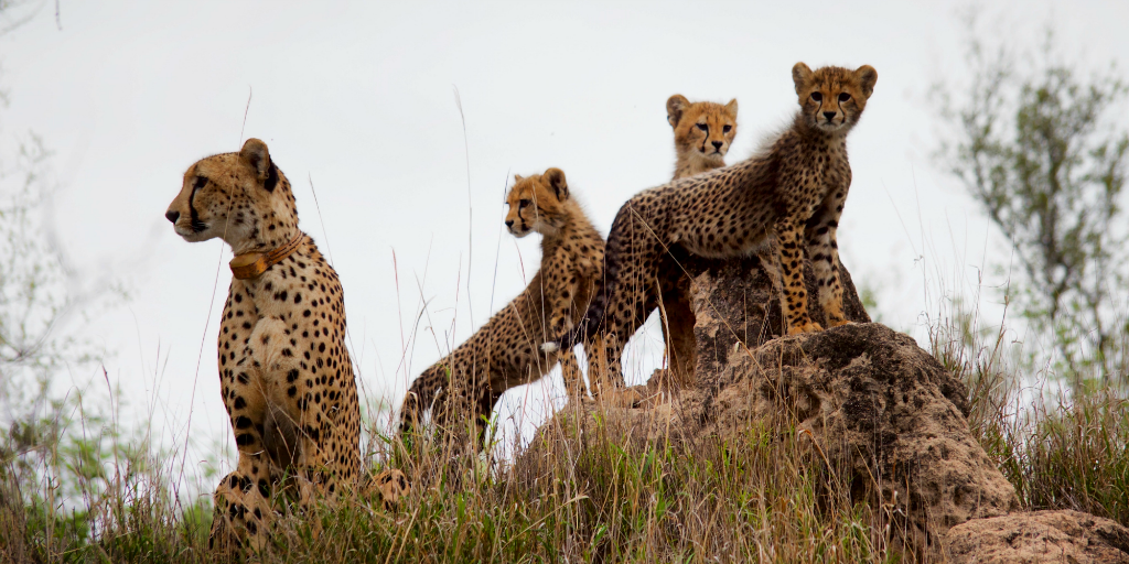Join a wildlife expedition and learn tracking techniques on your adult gap year.