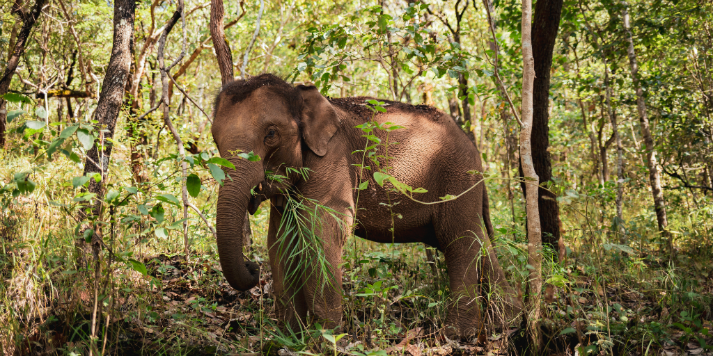 When you volunteer to work with animals in Africa, you can assist in the conservation of elephants
