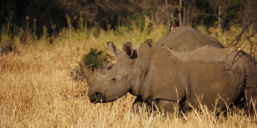 South Africa wildlife volunteer