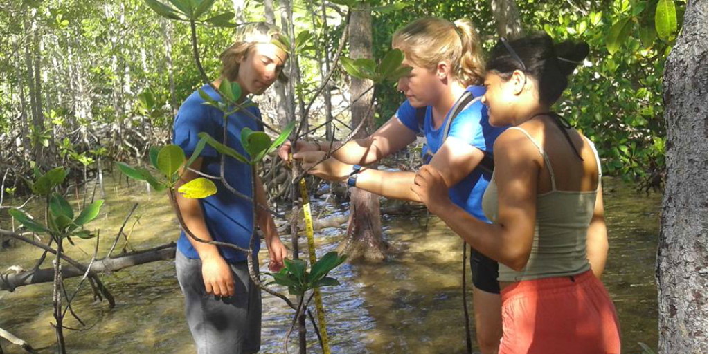 Three volunteers measuring the height of a tree as part of a conservation project in Curieuse.