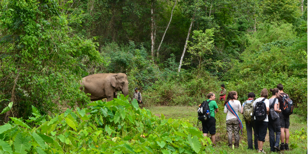 Volunteers observing an Asian elephant from a distance.