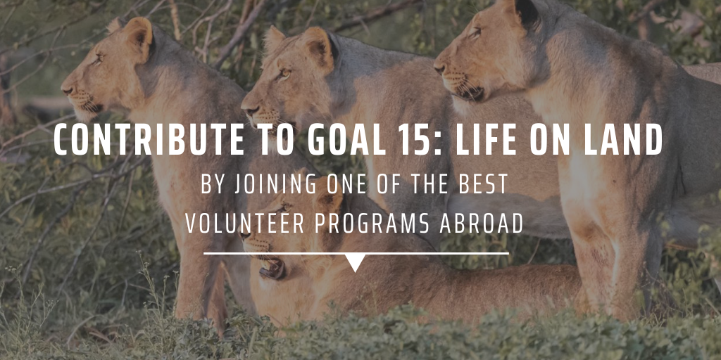 Contribute to Goal 15: Life on Land, by joining one of the best volunteer programs abroad