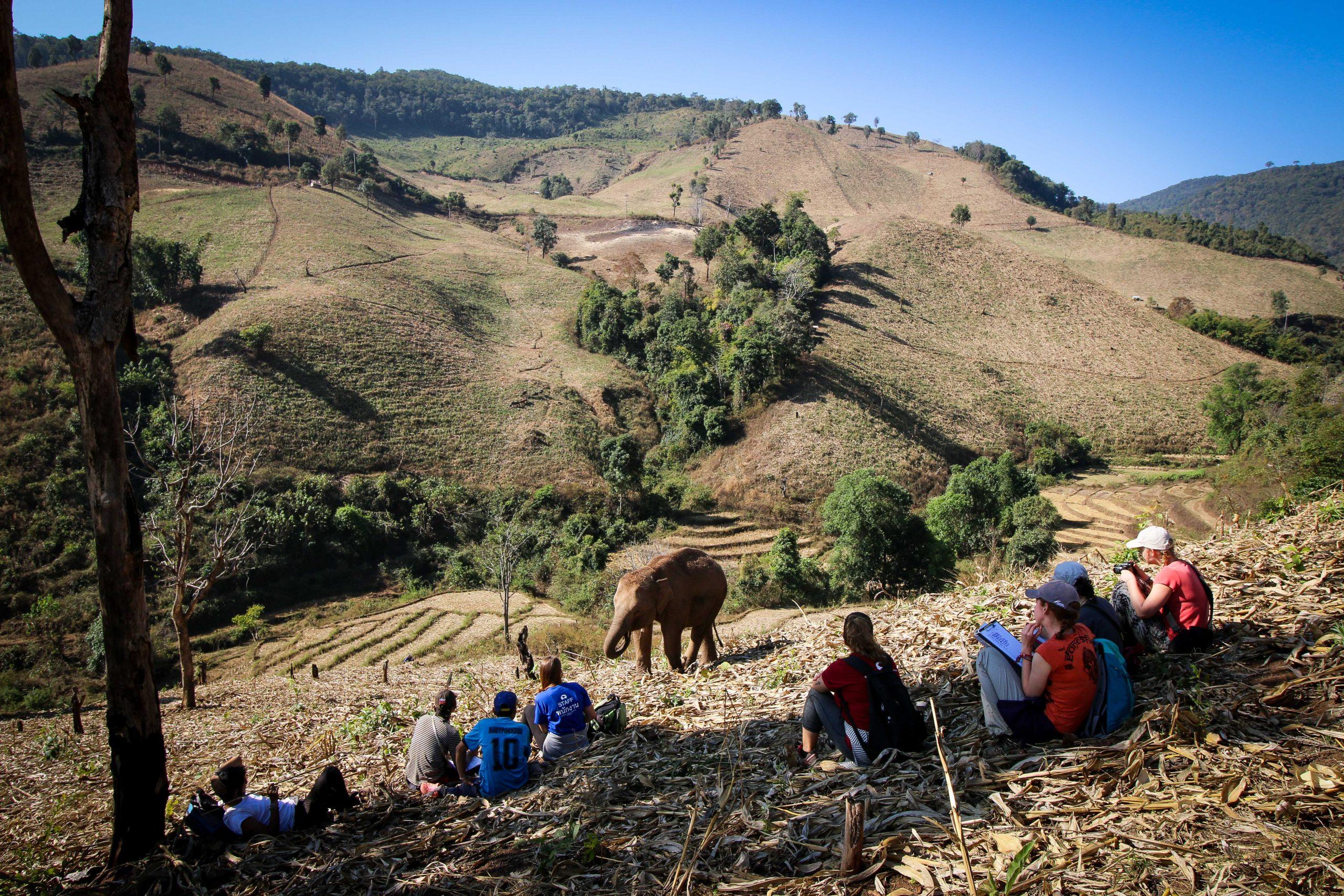 Elephant in Chiang Mai