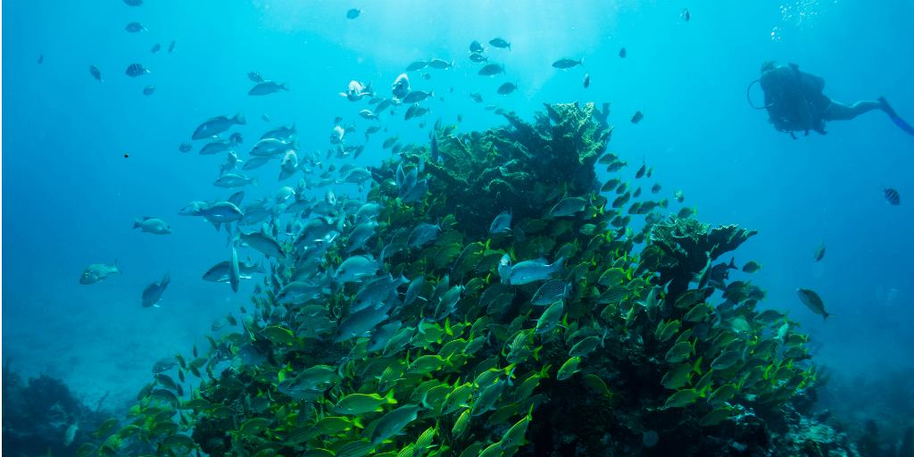 A school of fish swiming around a coral reef outcrop.