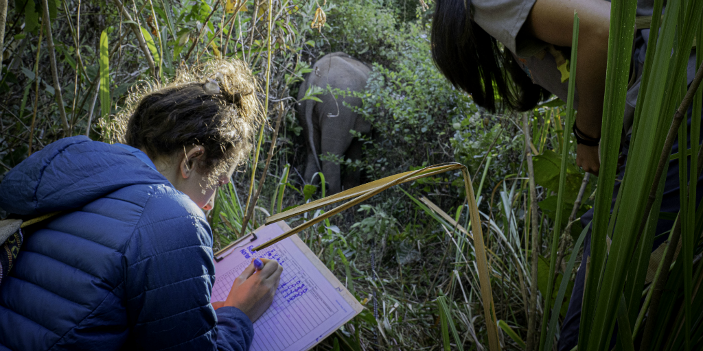 Volunteering in the wildlife conservation sector is one way to gain experience while having fun.