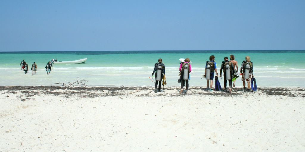 volunteer in Mexico in marine conservation