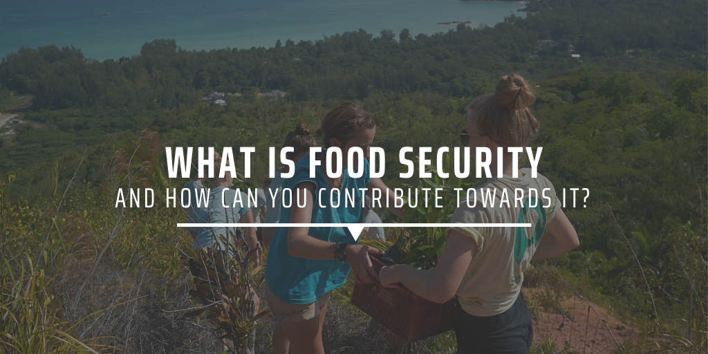What is food security, and how can you contribute towards it