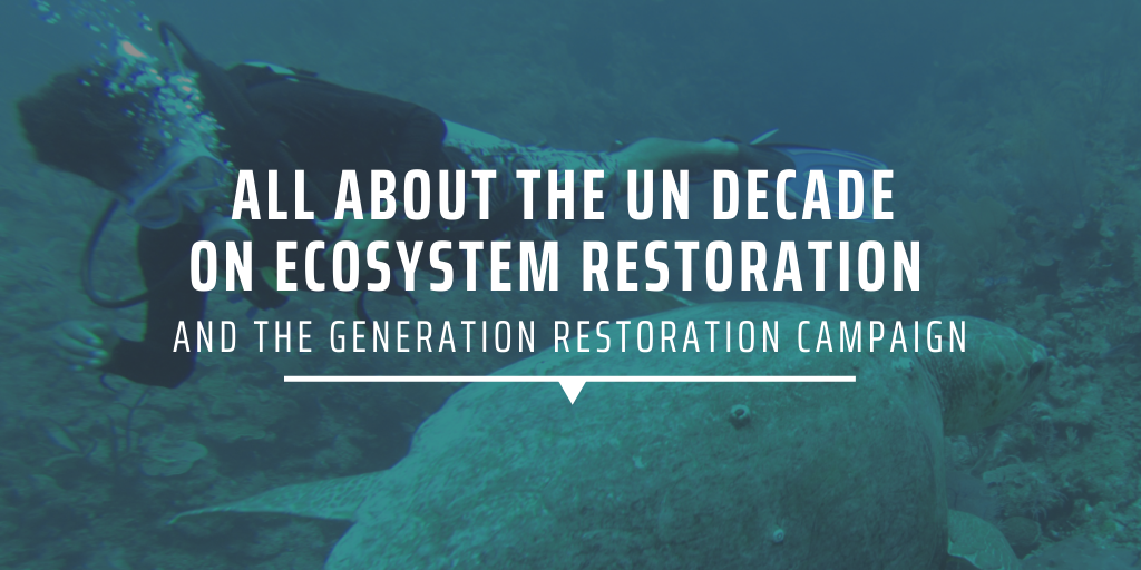 All about the UN Decade on Ecosystem Restoration and the Generation Restoration campaign
